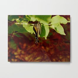 Clinging Metal Print