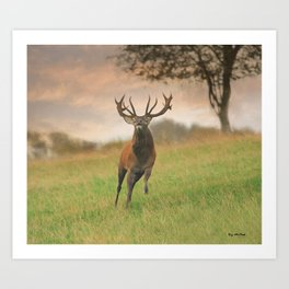 Charging Stag Art Print