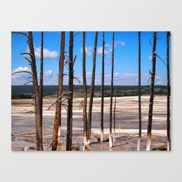 Dead Trees standing in mineral hot springs Canvas Print