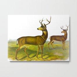 Columbian Black-tailed Deer Metal Print
