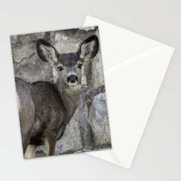 Young Mule Deer Stationery Cards
