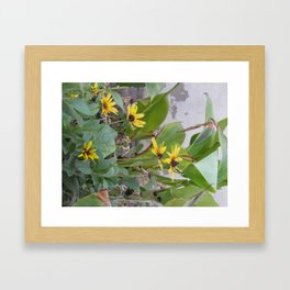 Sunshine Yellow- 1  Framed Art Print