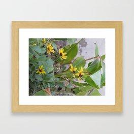 Sunshine Yellow- 1  Framed Art Print