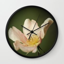October rose Wall Clock