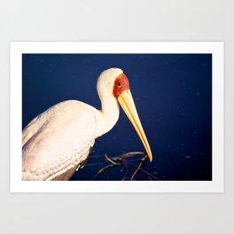 Yellow-Billed Stork Art Print