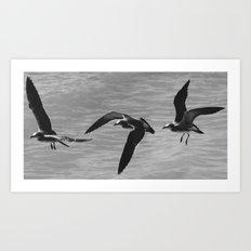 Flight Transitions Art Print
