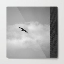 Ravens.... Urban Wildlife. Metal Print
