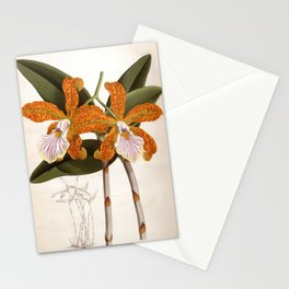Cattleya Velutina Vintage Lindenia Orchid Stationery Cards