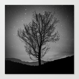 Lost lake solo tree Canvas Print