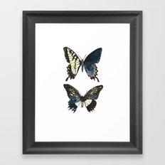 Gynandromorph No.1 Naturalist Butterflies Framed Art Print