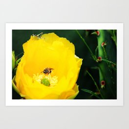 Cactus Flower, Bee and Grasshopper Art Print