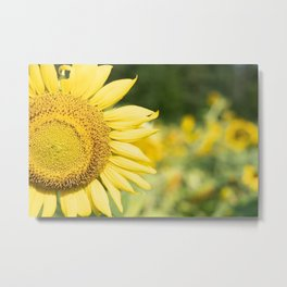 The Color of Sunflowers Metal Print