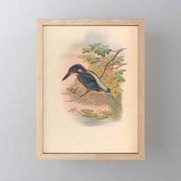 Alcdedo Grandis Kingfisher Vintage Bird Of Asia Framed Mini Art Print