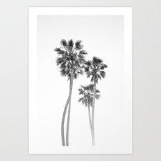 Monochrome California Palms Art Print