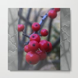 Late Winterberry Metal Print