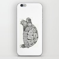 tortoise iPhone & iPod Skins featuring Tortoise by Carissa Tanton