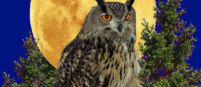 NIGHT OWL WITH FULL MOON Coffee Mug