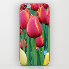 Tulips Red and Yellow iPhone Skin