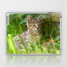 Sweet Baby Tiger Laptop & iPad Skin