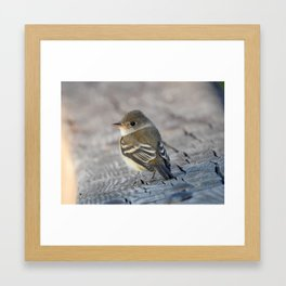 Willow Flycatcher Framed Art Print