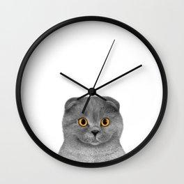 Scottish Fold kitten Wall Clock