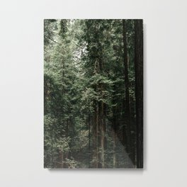 Redwoods in Muir Woods Metal Print
