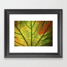Fall Leaf II Framed Art Print