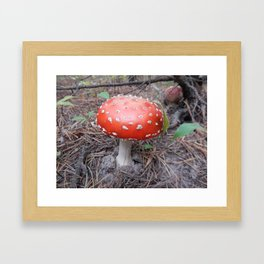 Picking mushrooms edible and not very in the woods Framed Art Print