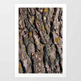 Tree Bark 1 Art Print
