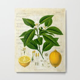 Lemon Botanical print on antique almanac collage Metal Print