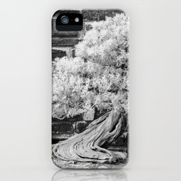 Bonsai Juniper Thrives in its Tray in a Japanese Garden iPhone Case