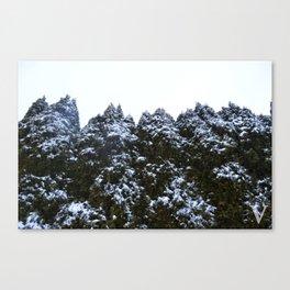 ascasc Canvas Print