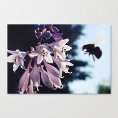 Natures Buzzin Canvas Print