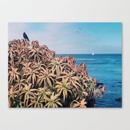 A crow soaking up the sun and the ocean view Canvas Print