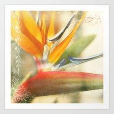 Bird of Paradise - Strelitzea reginae - Tropical Flowers of Hawaii Art Print