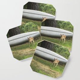 Curious Spotted Fawn Coaster