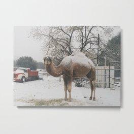 Camel Snow Metal Print