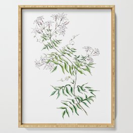 Jasmine Flower Illustration Serving Tray