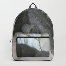 Russian Blue Kitten Relaxed On A Bed Backpack