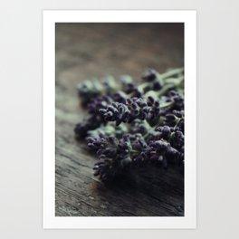 Cut Lavender Art Print