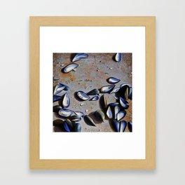 Moules on the rock Framed Art Print