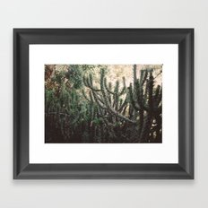 Cactus Framed Art Print