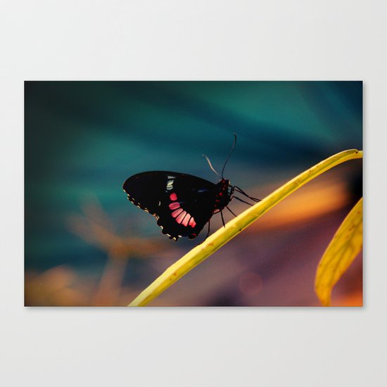 Butterfly#2 Canvas Print