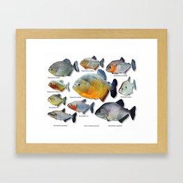 Piranha family Framed Art Print