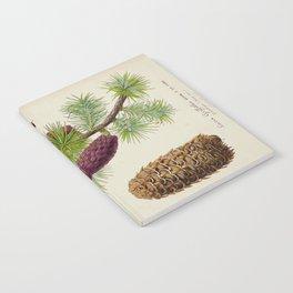Pine Cone Larix Griffithii Vintage Botanical Floral Flower Plant Scientific Illustration Notebook