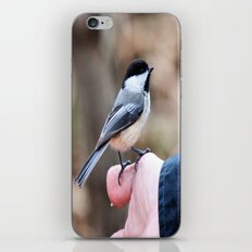 lets feed the birds iPhone & iPod Skin