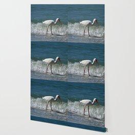 Florida White Ibis Wallpaper