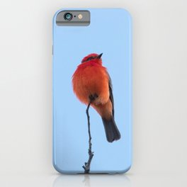 Nature Photography - Red Bird Under a Blue Sky iPhone Case