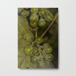 Grapevine #2 Metal Print