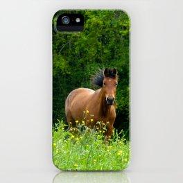 Horse in a pature iPhone Case